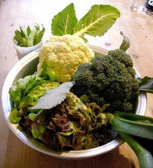 Blumenkohl, Wirsing, Lauch, Zuckerschoten und Salat