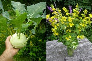 Riesen-Kohlrabi und ein Blumenstrauß