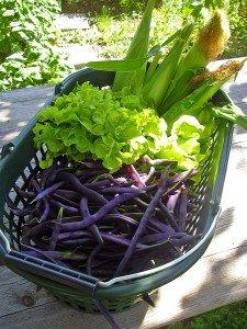 Zuckermais, Bohnen und grüner Salat