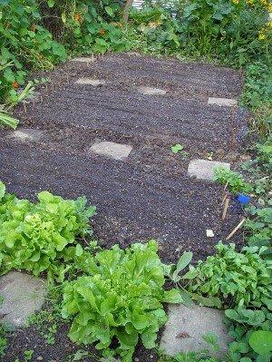 Saatreihen für Wintersalat auf frisch angelegten Beeten