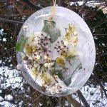 Der tellergroße Eistaler ,ot Blüten und Blättern hängt in den Sträuchern