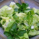 Gemischter Salat aus Kopfsalat, Feldsalat, Pflücksalat und Winterpostelein