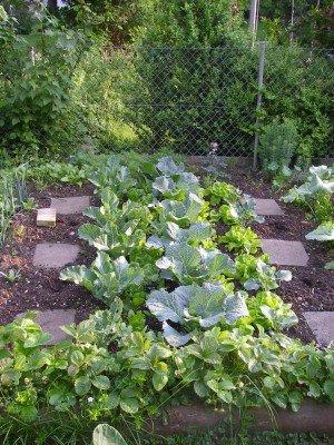 Blumenkohl, Wirsing und Sprossenbrokkoli