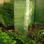 Beet 9 - Tomaten und Schnittmangold