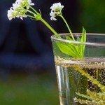 Waldmeister-Bowle im Glas