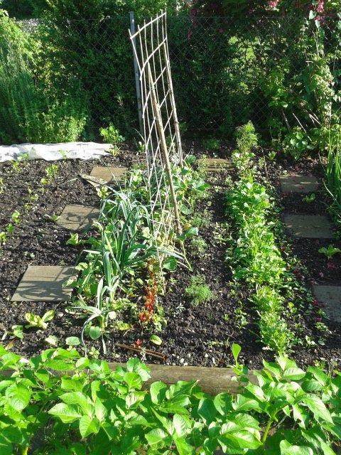 beetplanung hauptfrucht nebenkultur tomaten r ben kohl bohnen gartenblog. Black Bedroom Furniture Sets. Home Design Ideas