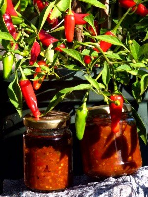 Hausgemachtes Chilipesto aus Apache-Chili