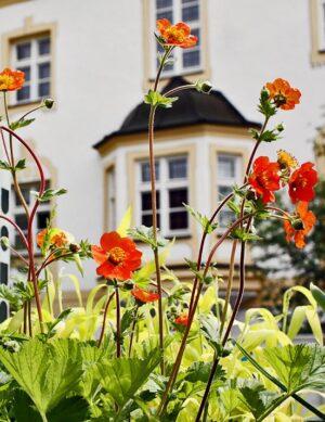 Freisinger Gartentage im Kloster Neustift