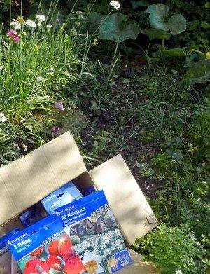 Eine Kiste Frühjahrsblüher