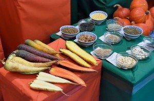 Die Bemühungen der Kultursaat-Gemüsezüchter haben tolle biodynamische Sorten hervorgebracht