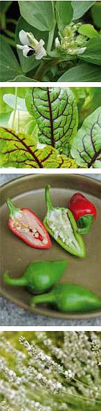 Bilderreihe Gemüse aus Biogärtnern am Fensterbrett