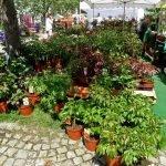 P1200823 paeonienstand Gartentage 2017 150x150 - Die 22. internationalen Freisinger Gartentage heißen Slowenien willkommen - gartenliteratur, blumen-im-garten