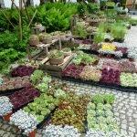 P1200825 bodendecker Gartentage 2017 150x150 - 23. Freisinger Gartentage 2019 - Schwedens Pflanzen- und Gartenwelt - gartenliteratur