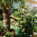 P1200847 Gartentage 2017 palme 150x150 - Die 22. internationalen Freisinger Gartentage heißen Slowenien willkommen - gartenliteratur, blumen-im-garten