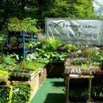 P1200851 Gartentage 2017 staudengaertnerei extragruen 150x150 - 23. Freisinger Gartentage 2019 - Schwedens Pflanzen- und Gartenwelt - gartenliteratur