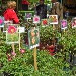 P1200865 Gartentage 2017 paeonien 150x150 - 23. Freisinger Gartentage 2019 - Schwedens Pflanzen- und Gartenwelt - gartenliteratur