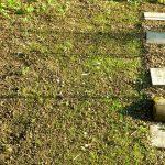 P1210035 garten am 19.05 wiese links keimt 150x150 - Garten- und Beetplan Frühling/Sommer 2017 - kuechengarten, gartenplanung