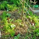 Beet mit in Reihen gepflanztem Gemüse