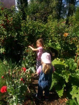 2017070309391100 300x400 - Gartennotizen Oktober 2017 - gartentagebuch-2018, gartenpraxis