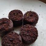 Fünf Pflanztöpfe, aus denen kleine Tomatenkeimlinge wachsen