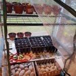 Blick in das kleine Foliengewächshaus mit kleinen Gemüsepflanzen und Ansaaten