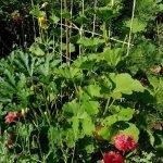 Beetplanung Gemüse: Zucchini und Hokkaido am Rankgitter