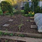 Beet 4 Mais 150x150 - Gemüsebeet planen für Mischkulturen - gartenpraxis, gartenplanung, aktuell