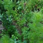 Blick auf des Gemüsebeet