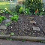 Beet 6 Tomaten 150x150 - Gemüsebeet planen für Mischkulturen - gartenpraxis, gartenplanung, aktuell