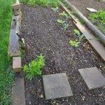 Beet A Zuckerschoten 150x150 - Gemüsebeet planen für Mischkulturen - gartenpraxis, gartenplanung, aktuell