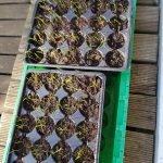 wp 1524057560716572850966 150x150 - Möhren pflanzen statt säen - wie geht das? - gartenpraxis, gartenplanung, aktuell