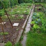 Überblick über eine Reihe von Gemüsebeeten