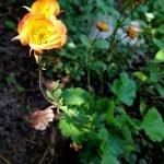 Leuchtende orangefarbene Blüte