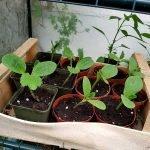 Nahaufnahme von den Fruchtgemüsepflanzen