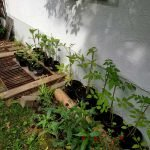 Töpfchen mit Pflanzen stahen an der Hausmauer