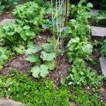 zucchini hokkaido rettich 20180523 063432 150x150 - Gemüsebeet planen für Mischkulturen - gartenpraxis, gartenplanung, aktuell