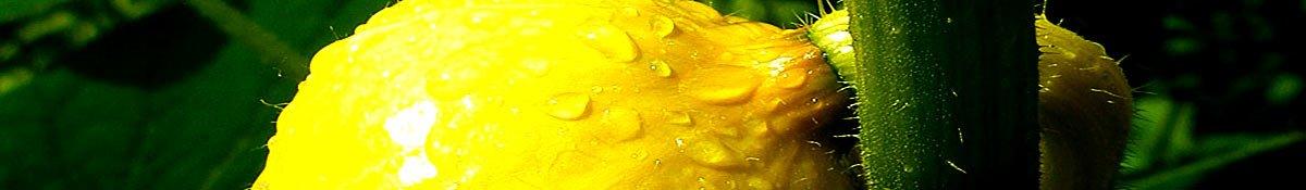 Gemüse im Garten und mehr – Freisinger Gartenblog
