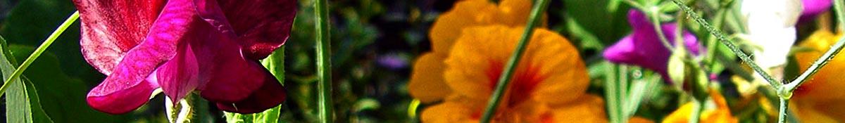 Freisinger Gartenblog – Gemüse im Garten und mehr