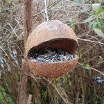 Kokosnuss Futterhäuschen aufghängt an einem Strauch
