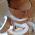 Kokosnuss Futterhäuschen