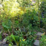 gemuesebeet 6 mitte august 20180813 080049 150x150 - Gemüsebeet planen für Mischkulturen - gartenpraxis, gartenplanung, aktuell