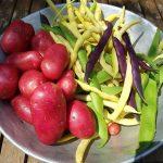 Kartoffeln und Stangenbohnen in der Schüssel