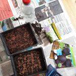 Schalen mit Erde, Samen, Wasser: Alles bereit zum Sprossen ziehen