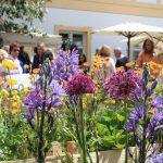 Im Vordergrund Blumen eines Auststellerstandes. im Hintergrund Besucher des Freisnger Gartentage