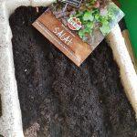 Samentüte Schnittsalat auf einer Anzuchbox