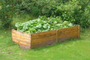 Anlage Hochbett: Aus Holz und mit Gemüse bepflanzt