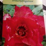 Gartenschild mit Aufschrift: Strauchpfingsrose Hesperus