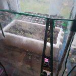 Blick in das Zimmergewächshaus mit Jungpflanzen