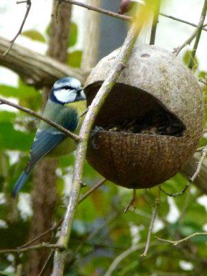 Kokosnuss Futterhäuschen selber bauen