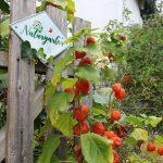 Gartenzaun mit Schild und Lampionbllumen